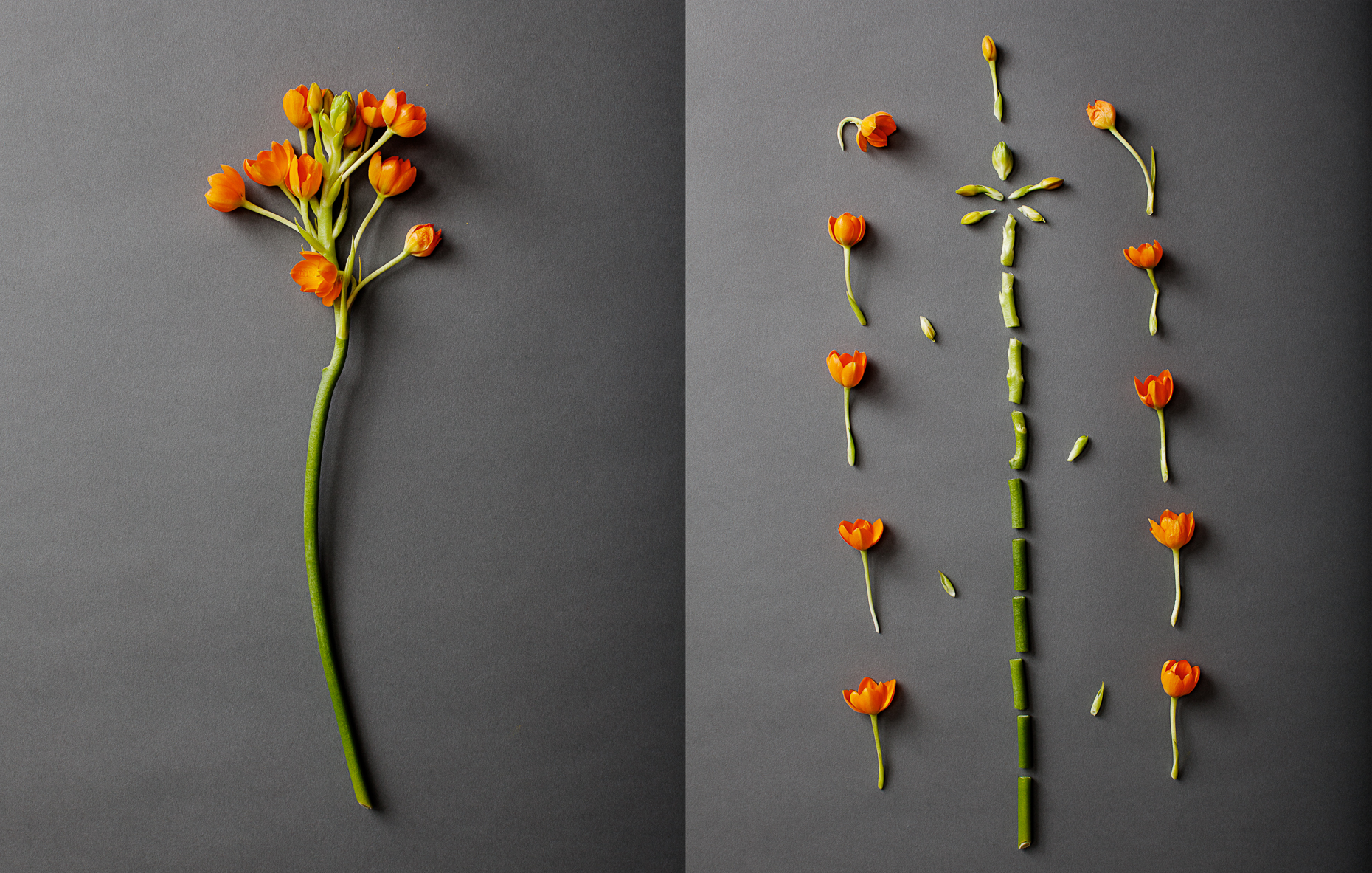 Flowers-059_diptych